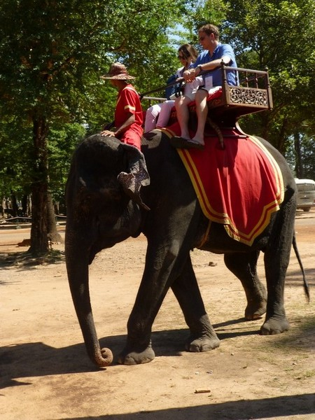 transport-de-touristes-par-elephant